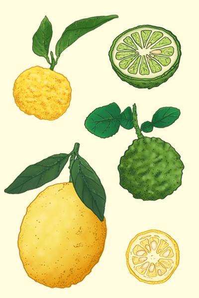 Citrons animation illustration